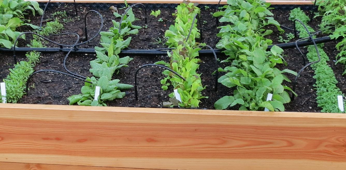 Bewasserung Fur Hochbeete Biogarten Blog