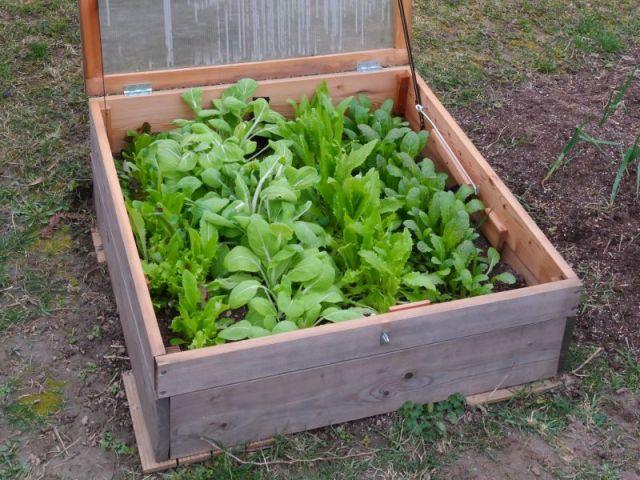 Wintergemuse Noch Dieses Jahr Anbauen Biogarten Blog