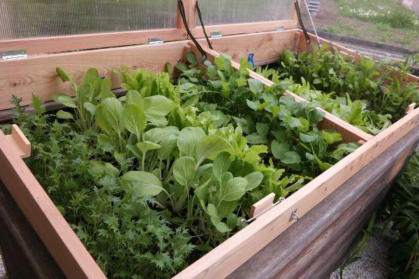In Diesem Beitrag Erfahren Sie, Wie Der Anbau Von Wintergemüse Auch In  Ihrem Garten Ganz Einfach Gelingt.