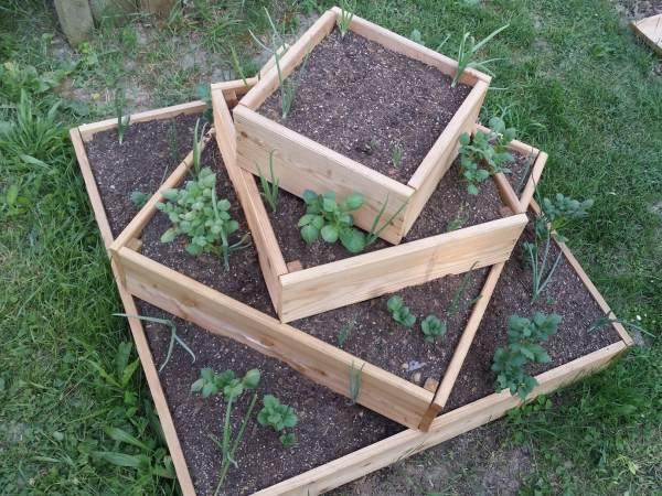 Grosse Kartoffelernte Auf Kleiner Flache Biogarten Blog