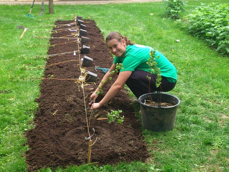 Naschecken Anlegen   Beerensträucher Pflanzen