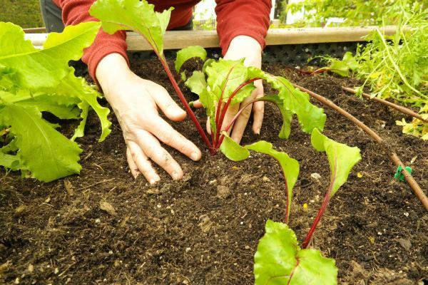 Trendiges Gesundes Gartnern Hochbeet Bauen Biogarten Blog