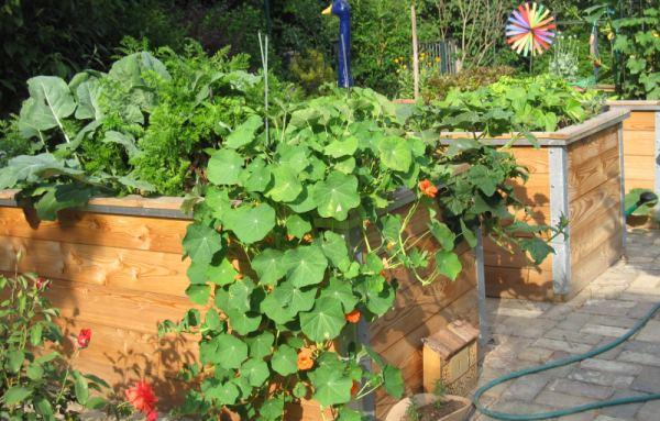 Bio Garten Hochbeet Aus Holz Nutzlinge Fruhbeet Bio Samen Und